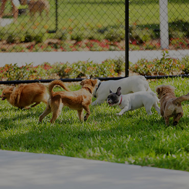 Large Dog Park at Bridgewater at Town Center Apartments